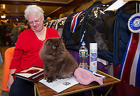 """Sheila Walters of Newport, NH with her Exotic Long Hair """"Booja"""" received Best of Breed and Best Color during judging on Saturday the Cat Show held at the Laconia VFW Hall.  (Karen Bobotas/for the Laconia Daily Sun)"""
