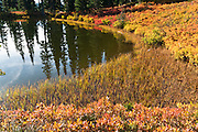 One of the unnamed tarns (mountain ponds) near Faraway Rock on the Lakes Trail, Mazama Ridge, near Paradise, Mount Rainier National Park, Washington, USA.