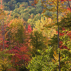 Fall in a forest in Grafton, New Hampshire.
