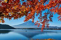 Japon, île de Honshu, région de Shizuoka, lac Kawaguchiko et le mont Fuji en automne // Japan, Honshu, Shizuoka, Fujiyoshida, Kawaguchiko lake and Mount Fuji in automn colour
