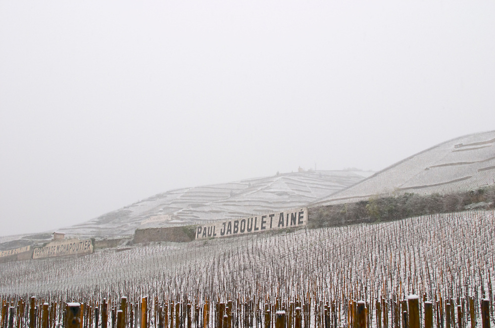 Sign Paul Jaboulet Aine, the Les Greffeux vineyard in front. Ermitage La Chapelle hill in background and Chante Alouette to the right. The Hermitage vineyards on the hill behind the city Tain-l'Hermitage, on the steep sloping hill, stone terraced. Sometimes spelled Ermitage. Vineyards under snow in seasonably exceptional weather in April 2005. Tain l'Hermitage, Drome, Drôme, France, Europe