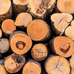 Recently harveseted logs in Johnsonburg, Pennsylvania.