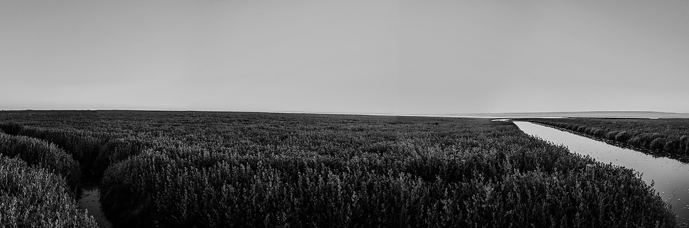 Nederland, Friesland, Noarderleech, 18/19-0702016; Noorderleeg, buitendijks kweldergebied in de avondschemering. Onderdeel van kweldergebied Noard-Fryslân Bûtendyks. Zomerversie.<br /> Salt marshes outside the sea wall, evening twilight <br /> <br /> Gigapanorama (digital montage). <br /> copyright © 2016 foto/photo Siebe Swart