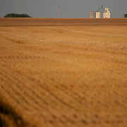 Wheat harvesting on the summer solstice in 2021. June 20th. Stafford, KS.