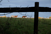 Horses in a field of a Warwickshire landscape on 10th November 2020 near Henley-in-Arden, United Kingdom.