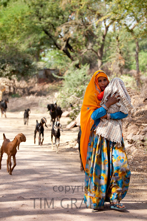 Indian villager leading herd of goats in village near Ranthambore in Rajasthan, Northern India
