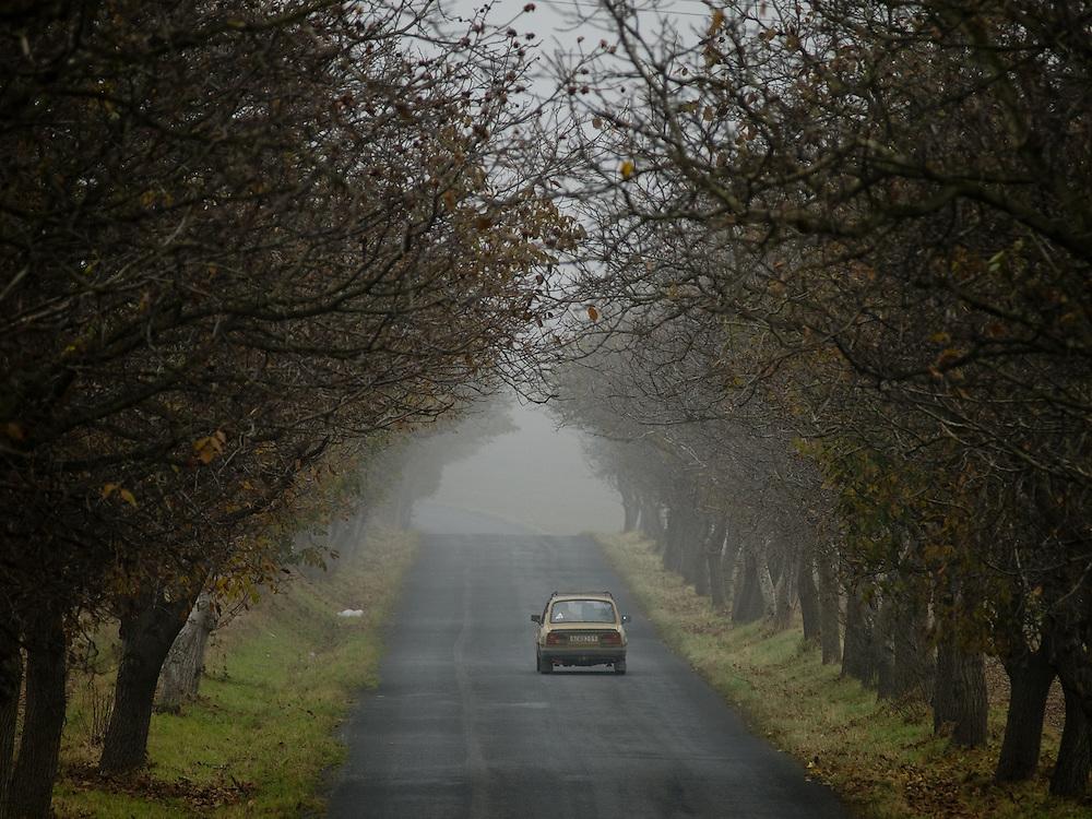Steti/Tschechische Republik, Tschechien, CZE, 25.10.2008: Alter Skoda 120 in einer herbstlichen Alle in der Nähe von Steti.<br /> <br /> Steti/Czech Republic, CZE, 25.10.2008: Ols Skoda 120 driving through an autumn landscape close to Steti.