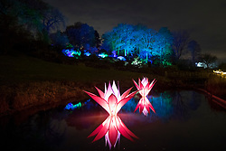 © Licensed to London News Pictures. 30/11/2017. London, UK. Illuminated Lotus flowers at RHS Wisley Gardens. Trees and plants are illuminated at Royal Horticulture Society Wisley Gardens for the Christmas Glow. Hundreds of different lights can be seen when following the trail throughout the gardens opening 1 December 2017 – 3 January 2018. Photo credit: Peter Macdiarmid/LNP
