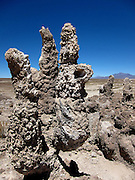 Just south-west of the edge of the Salar de Uyuni on the Bolivian Altiplano are some areas with petrified cactus trees - this one has a hollow tube in the middle. Nearby there are caves containing petrified leaves and stromatolites.