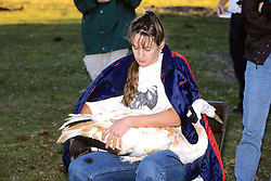 Holding Whooping Crane With Radio Transmitter