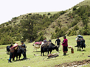 A Brokpa family prepares to migrate to their summer pastures with their 'zhomo' (male yak and female cow cross), Merak, Eastern Bhutan. The Brokpa, the semi-nomads of the villages of Merak and Sakteng are said to have migrated to Bhutan a few centuries ago from the Tshona region of Southern Tibet. Thriving on rearing yaks and sheep, the Brokpas have maintained many of their unique traditions and customs.