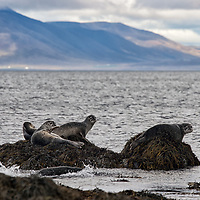 As the seals are very shy, you should use a large tele lens if you want to take pictures of them.