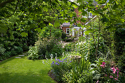 Looking down the garden towards the house framed by the leaves of the tulip tree - Liriodendron tulipifera. Curving lawn and borders