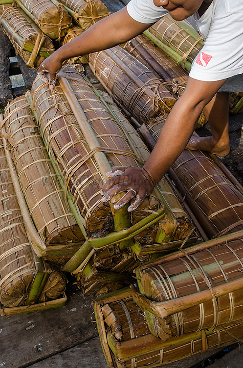 Sago palm (Metroxylon sagu) package<br /> Biak Island<br /> West Papua<br /> Indonesia<br /> Very important staple for starch