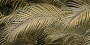 Palm fronds from an abstract design