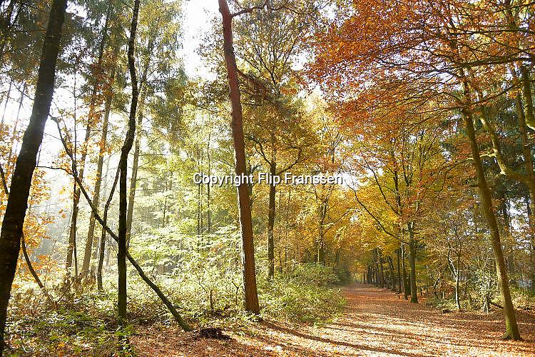 Nederland, Nijmegen, 1-11-2015 Dit weekeind gaf prachtige herfstdagen.FOTO: FLIP FRANSSEN/ HH