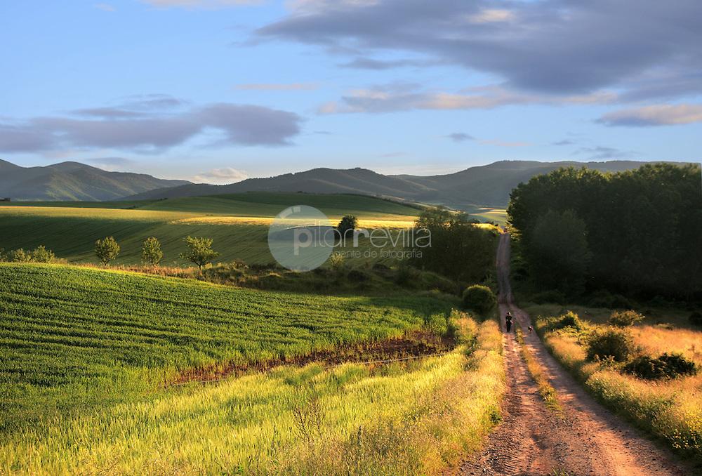 Campos de cereales en el valle de Cardenas. La Rioja ©Daniel Acevedo / PILAR REVILLA