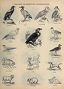 Gallery of Scripture Illustrations Biblical Birds from ' The Doré family Bible ' containing the Old and New Testaments, The Apocrypha Embellished with Fine Full-Page Engravings, Illustrations and the Dore Bible Gallery. Published in Philadelphia by William T. Amies in 1883