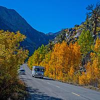 Cars drive past fall colored aspens in Bishop Creek Canyon in the Eastern Sierra Nevada near Bishop, California.