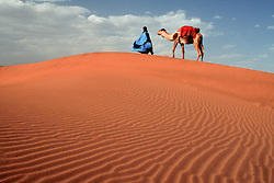 Africa, Morocco, Draa Valley, Tinfou, man in blue robe leading camel on sand dunes