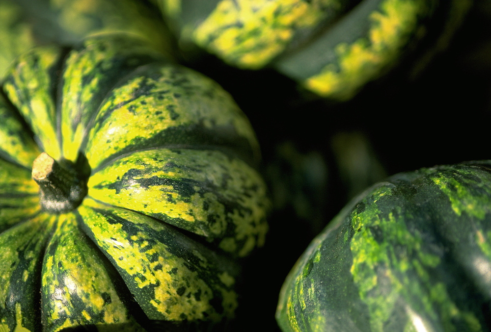Close up selective focus photograph of a group of Carnival Squash in the sunlight
