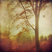 Trees in morning haze and backlight on a November morning - textured photograph<br /> <br /> Prints & much more: http://www.redbubble.com/people/dyrkwyst/works/17509451-last-poet?ref=recent-owner