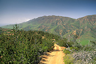 Dirt road through pine forest and green hills in spring, near the West End, Santa Cruz Island, Channel Islands, California