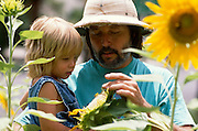 Carey Lung and daughter Hailey Treiber Lung looking at sunflowers, Tucson, Arizona..Subject photograph(s) are copyright Edward McCain. All rights are reserved except those specifically granted by Edward McCain in writing prior to publication...McCain Photography.211 S 4th Avenue.Tucson, AZ 85701-2103.(520) 623-1998.mobile: (520) 990-0999.fax: (520) 623-1190.http://www.mccainphoto.com.edward@mccainphoto.com