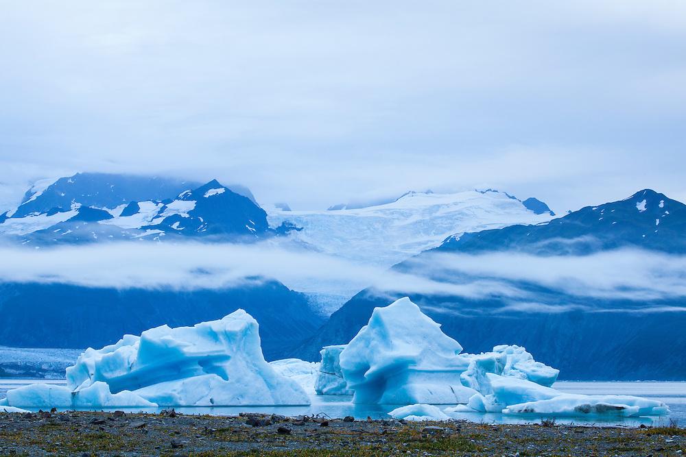 Icebergs in Alsek Lake. Glacier Bay National Park, AK.