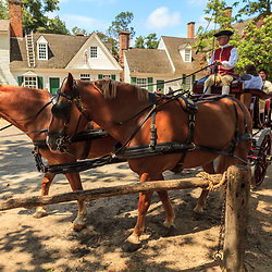 A horse carriage driver away from a stop in Colonial Williamsburg, VA.