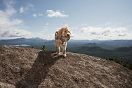 fluffy, mixed breed dog standing on mountain summit
