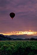 Hot air balloon over vineyards at sunrise, near Yountville, Napa Valley, Napa County, California
