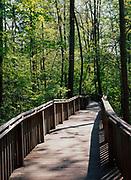 Boardwalk through southern hardwood forest, Azalea Cascade Trail, DeSoto State Park, Alabama.