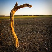 Piece of wood standing in Gobi desert evening sun (, Mongolia - Sep. 2008) (Image ID: 080906-1919091a)