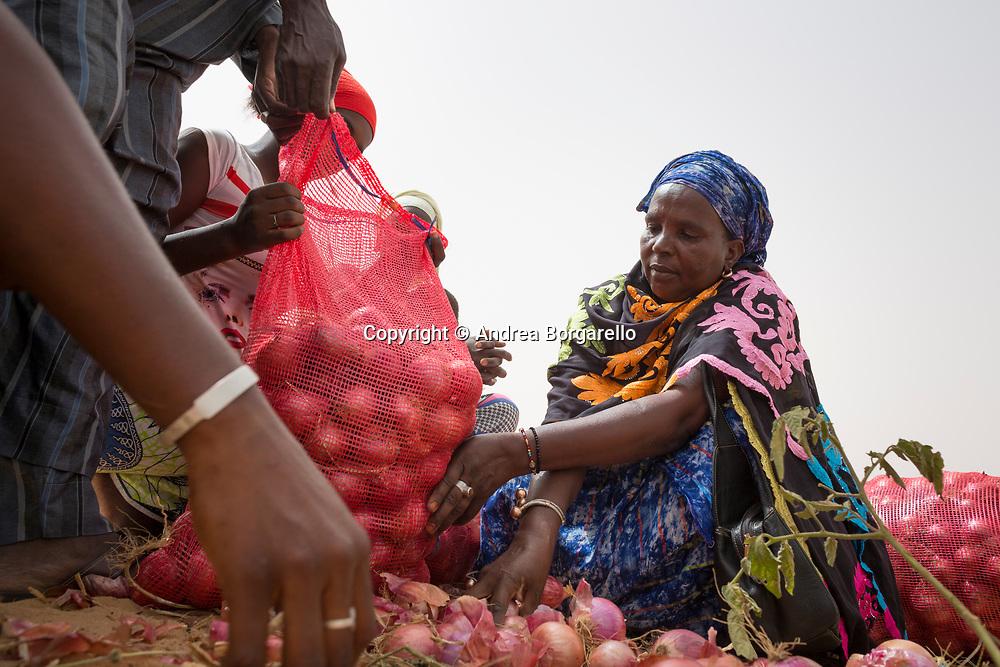 Senegal, agro-cooperative, CISV