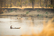 Man spear fishing in the Luangwa River Valley, Zambia, Africa
