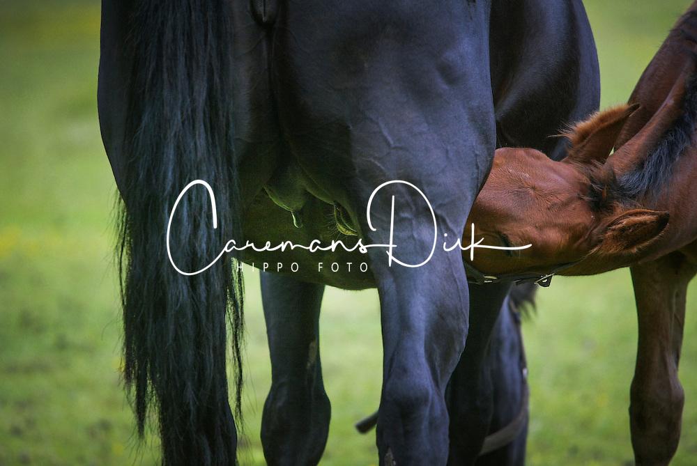 Foal<br /> Veulens Beckum 2004<br /> Photo © Hippo Foto