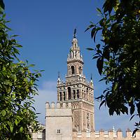 Europe, Spain, Seville. The Cathedral of Seville, Cathedral de Sevilla. View of the Cathedral and La Giralda, the belltower minaret.