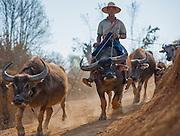 Country man riding a buffalo in Myanmar