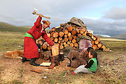 Stunning images reindeer herders of Mongolia<br /> <br /> Tsaatan people are reindeer herders and live in northern Khövsgöl Aimag of Mongolia. Originally from across the border in what is now Tuva Republic of Russia,the Tsaatan are one of the last groups of nomadic reindeer herders in the world. They survived for thousands of years inhabiting the remotest Ulaan taïga, moving between 5 and 10 times a year. <br /> The reindeer and the Tsaatan people are dependent on one another. Some Tsaatan say that if the reindeer disappear, so too will their culture. The Tsaatan depend on the reindeer for almost, if not all, of their basic needs:  their reindeers provide them with milk, cheese, meat, and transportation. They sew their clothes with reindeer hair, reindeer dung fuels their stoves and antlers are used to make tools. They do not use their animals for meat. This makes their group unique among reindeer-herding communities. As the reindeer populations shrink, only about 40 families continue the tradition today. Their existence is threatened by the dwindling number of their domesticated reindeer. Many have swapped their nomadic life for urban areas. <br /> <br /> Cutting wood for the daily needs <br /> ©Pascal MANNAERTS/Exclusivepix Media
