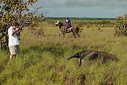 Giant Anteater (Myrmecophaga tridactyla) & Graham Watkins<br /> Savannah<br /> Rupununi<br /> GUYANA. South America<br /> RANGE: Central and South America