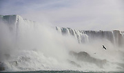 SHOT 10/21/17 1:16:02 PM - Seagulls fly around the American Falls in Niagara Falls, N.Y. The American Falls is the second-largest of the three waterfalls that together are known as Niagara Falls on the Niagara River along the Canada–U.S. border. Unlike the much larger Horseshoe Falls, of which two-thirds is located in Ontario, Canada and one-third in the U.S. state of New York, the American Falls is entirely within the United States. Located on the Niagara River, which drains Lake Erie into Lake Ontario, the combined falls form the highest flow rate of any waterfall in North America that has a vertical drop of more than 165 feet (50 m). During peak daytime tourist hours, more than six million cubic feet of water goes over the crest of the falls every minute. Horseshoe Falls is the most powerful waterfall in North America, as measured by flow rate. Niagara Falls is famed both for its beauty and as a valuable source of hydroelectric power. The falls are 17 miles (27 km) north-northwest of Buffalo, New York. Buffalo, N.Y. is the second most populous city in the state of New York and is located in Western New York on the eastern shores of Lake Erie and at the head of the Niagara River. By 1900, Buffalo was the 8th largest city in the country, and went on to become a major railroad hub, the largest grain-milling center in the country and the home of the largest steel-making operation in the world. The latter part of the 20th Century saw a reversal of fortunes: by the year 1990 the city had fallen back below its 1900 population levels. (Photo by Marc Piscotty / © 2017)
