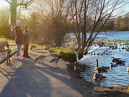 Wantagh, New York, U.S.  April 22, 2020. Families and two fishermen go to Mill Pond Park, with its swan and geese, as dusk approaches during Earth Day.