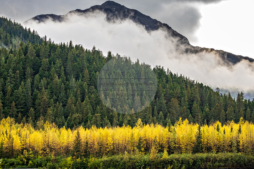 Clouds gather over the Kenai Mountains with colorful autumn foliage seen from Glacier View outlook at the Kenai Fjords National Park near Seward, Alaska.