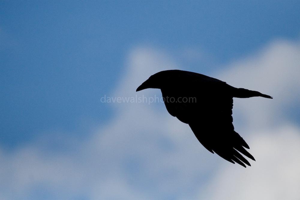 Raven, Alaska