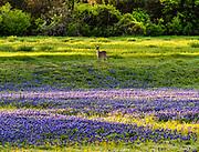 Photo accompanied Urban Getaway, a piece I wrote for Lady Bird Johnson Wildflower Center's Wildflower Magazine, spring 2020, Austin, Texas