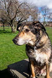 Ecclesfield Park with William Wallace<br /> <br />  Copyright Paul David Drabble<br /> 17th March 2019<br />  www.pauldaviddrabble.co.uk