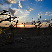 Scattered corn stalks are seen amidst the rising sun in a field along Route 40 outside of Rocheport on the morning of September 17th, 2019. Taken as part of the 71st Missouri Photo Workshop in Boonville, Mo.