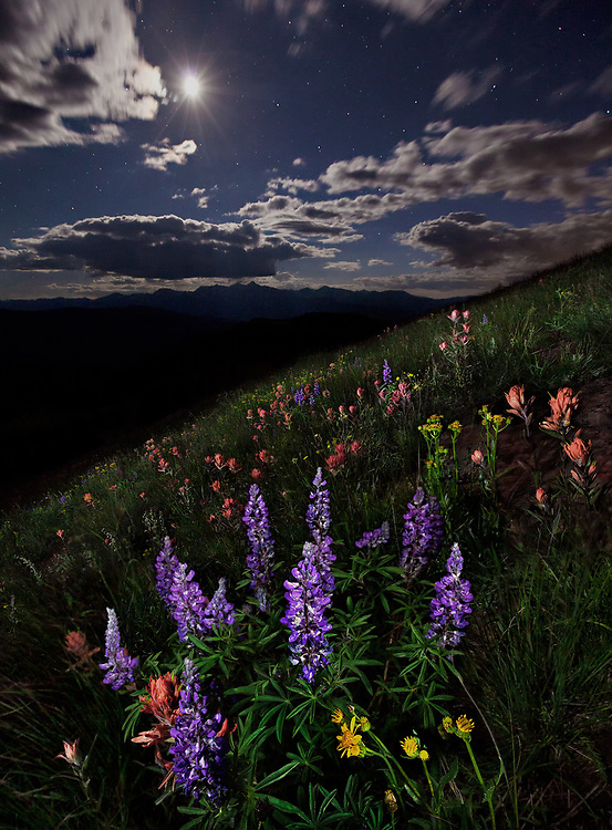 Moonlit wildflowers in the Colorado mountains.