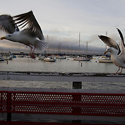 Wharf in Monterey, California along the Central Coast.